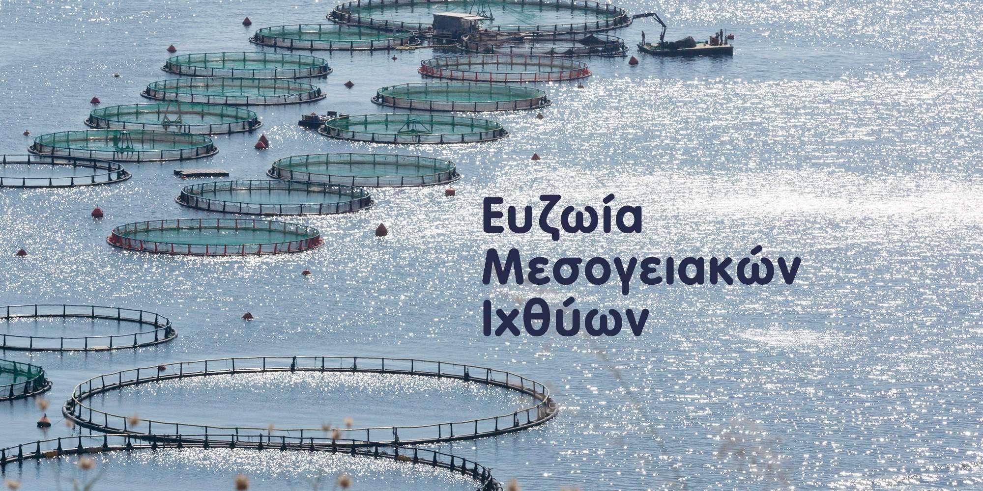 Κλωβοί ελληνικής ιχθυοκαλλιέργειας - Ευζωία Μεσογειακών Ιχθύων